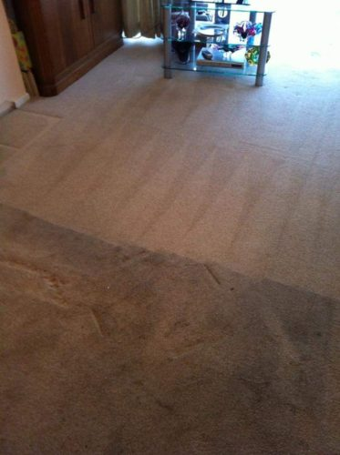 carpet cleaner in York